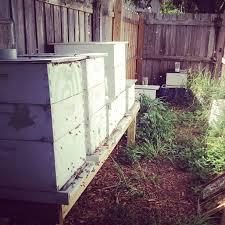 Backyard Beehive Beekeeping Archives Harris Honey