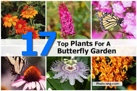 17 top plants for a butterfly garden