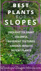 landscaping steep slopes drought tolerant plants drought