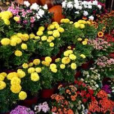flowers international international garden inc 24 photos 22 reviews florists 807