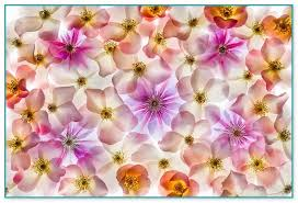 flowers coupon field of flowers coupon