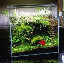 Small Tank Aquascaping 100 Best Cube And Small Aquascapes Images On Pinterest