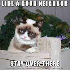 Pet Insurance Meme - grumpy cat insurance plus agencies inc