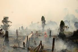 forest fires stoke record loss in world tree cover monitor