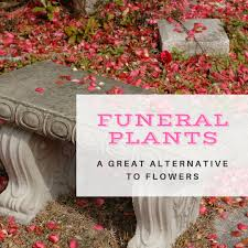 plants for funerals funeral plants an important alternative to funeral flowers