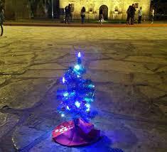 tiny tree protest gains momentum with mini tree lighting ceremony