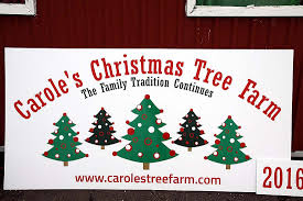 carole u0027s christmas tree farm christmas trees for sale birch