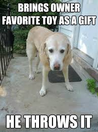 Sad Animal Memes - 10 hilarious memes every dog owner can relate to my wonderful
