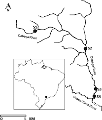 Parana River Map Longitudinal Distribution Of The Ichthyofauna In A Tributary Of