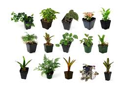 Small House Plants by Amazon Com 24x18x18 Tropical Vivarium Plant Kit Plant