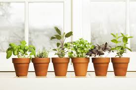 inside herb garden indoor herb garden ideas how to make a kitchen herb garden
