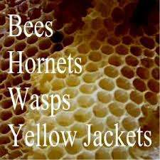 Bee Deterrent For Patio 40 Best Bees U0026 Wasps Images On Pinterest Insects Bees And Pest
