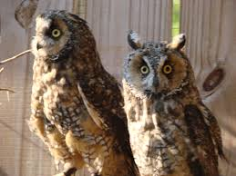 Owl Lovers by Owls In Michigan Wildside Rehabilitation Center