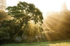 what we learn from trees teachers of oak tree tree