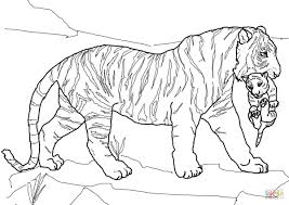 coloring page tigers tiger cub coloring pages mother carrying page free printable