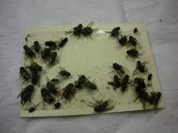 What Are The Small Flies In My Bathroom Small Flies In Bathroom With Ideas Hd Photos 42267 Kaajmaaja