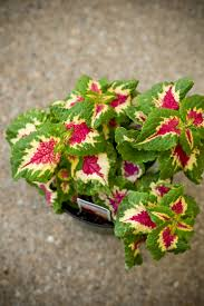 Plants For Winter Window Boxes - 10 colorful u0026 low maintenance window box plants apartment