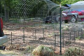 Growing Pumpkins On A Trellis Built My First Cattle Panel Arch Trellis Today
