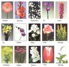 30 flower pictures and names list