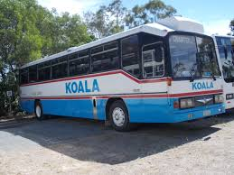 nissan australia commercial vehicles koala koaches australia showbus com photo gallery