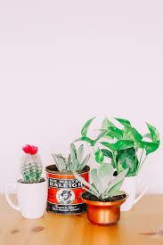 mini plants two fun ways to pot mini plants
