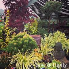 Patio Plants For Sun Patio Trees For Small Gardens