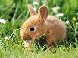 rabbit bunny wallpaper bunny rabbit wallpaper pictures gallery