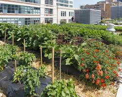 Urban Gardening Images Sustainable Cities Require Urban Agriculture