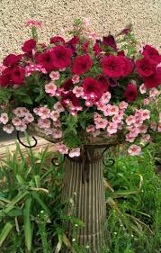 native plants for butterfly gardening benton soil u0026 water 60 best flowers images on pinterest flowers plants and sew