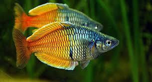 Buy Ornamental Fish Aquariums The Finest Quality Aquarium Livestock And