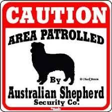 australian shepherd yard art dog yard sign