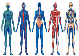 Anatomy And Physiology Introduction To The Human Body Anatomy And Physiology A Introduction Online Course Careerline