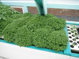 organic farming greenhouse friendly aquaponics