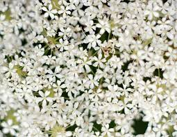 small white flowers small white flowers bunch background stock photo colourbox