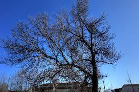 thunder bay algoma trees