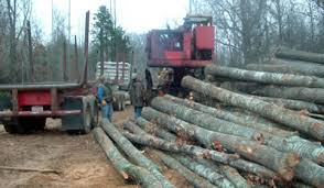 tips for land owners with timber selling timber trees logs