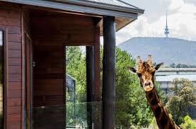 Bored At Home Create Your Own Zoo by Jamala Wildlife Lodge Hotel Business Insider