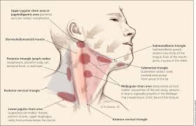Anatomy Behind The Ear Evaluation Of Neck Masses In Adults American Family Physician