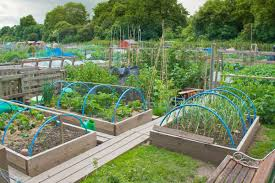 Kitchen Gardening Ideas Vegetable Garden Ideas And Designs 3039
