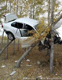 overburdened trees car crashes into people u0027s daily china