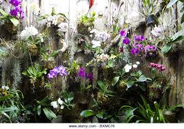 tropical plants greenhouse stock photos u0026 tropical plants