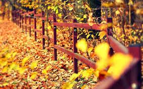 autumn leaves wallpapers wallpapersafari