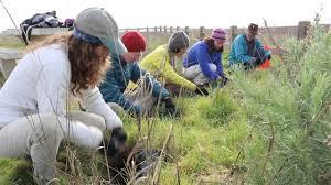 native san francisco plants airbnb for good san francisco grassroots ecology edgewood park