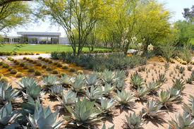 Succulent And Cacti Pictures Gallery Garden Design How To Design Succulent Garden Superhomeplan Com