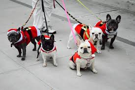 top 10 dog sitters in new york city