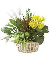 Flower Bouquets For Men - gift baskets for men same day gifts for him