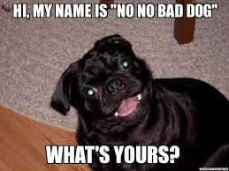 Bad Dog Meme - no no bad dog hi my name is no no bad dog what s yours