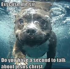 Water Meme - dog inside water funny meme picture