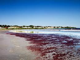 Rhode Island beaches images Best budget beaches travel channel jpeg