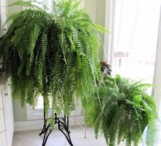 indoor plants that don t need sunlight indoor plants that don t need sun interior design